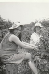Fruit Picking Hiam's Orchard, Wood End - Sheila Crick & Susan Clarke 1973