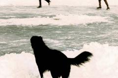 Fen skating (Elaine Gebbie)